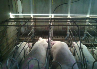 instalaciones eléctricas en granjas (3)