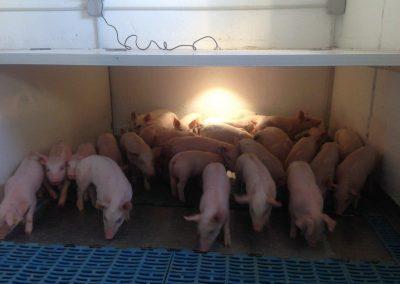 instalaciones eléctricas en granjas (7)